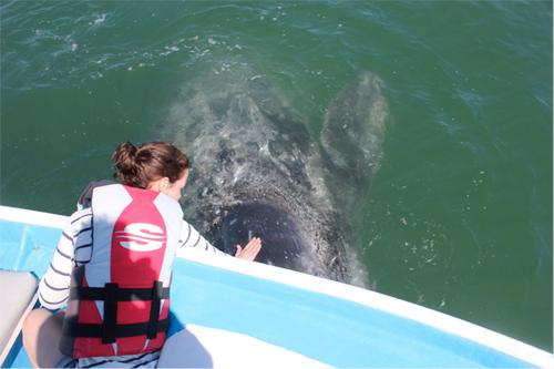 lindsay-whale