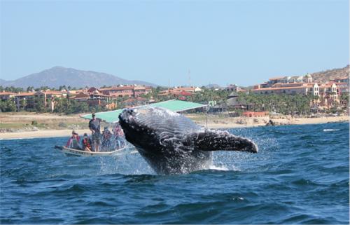 whale-(500)