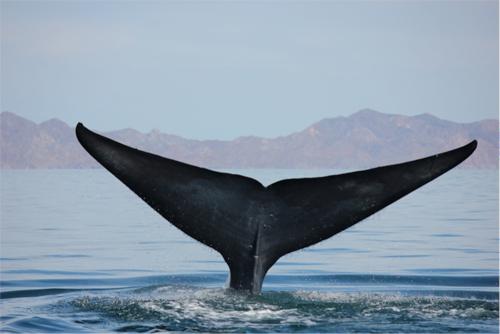 whale-fin